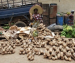 Yams in the Market