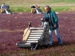 Dry Harvesting