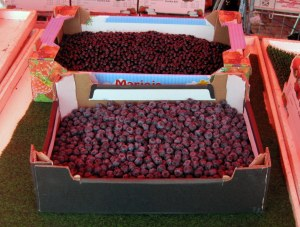 Cultivated and Wild Blueberries